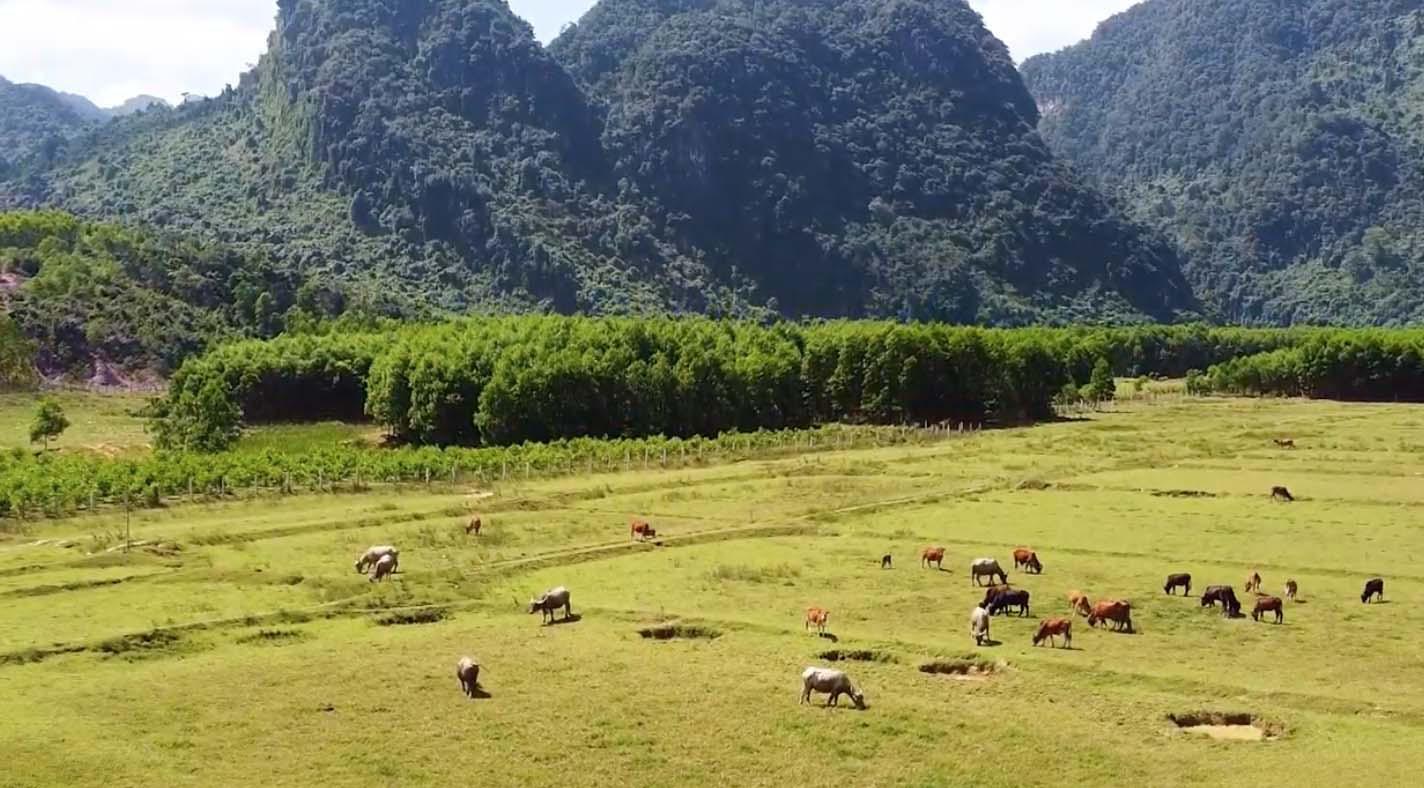 Đẹp mê mẩn với hình ảnh Quảng Bình thiên nhiên tươi đẹp trong MV của ca sĩ Trần Nguyên Thắng - Ảnh 1.