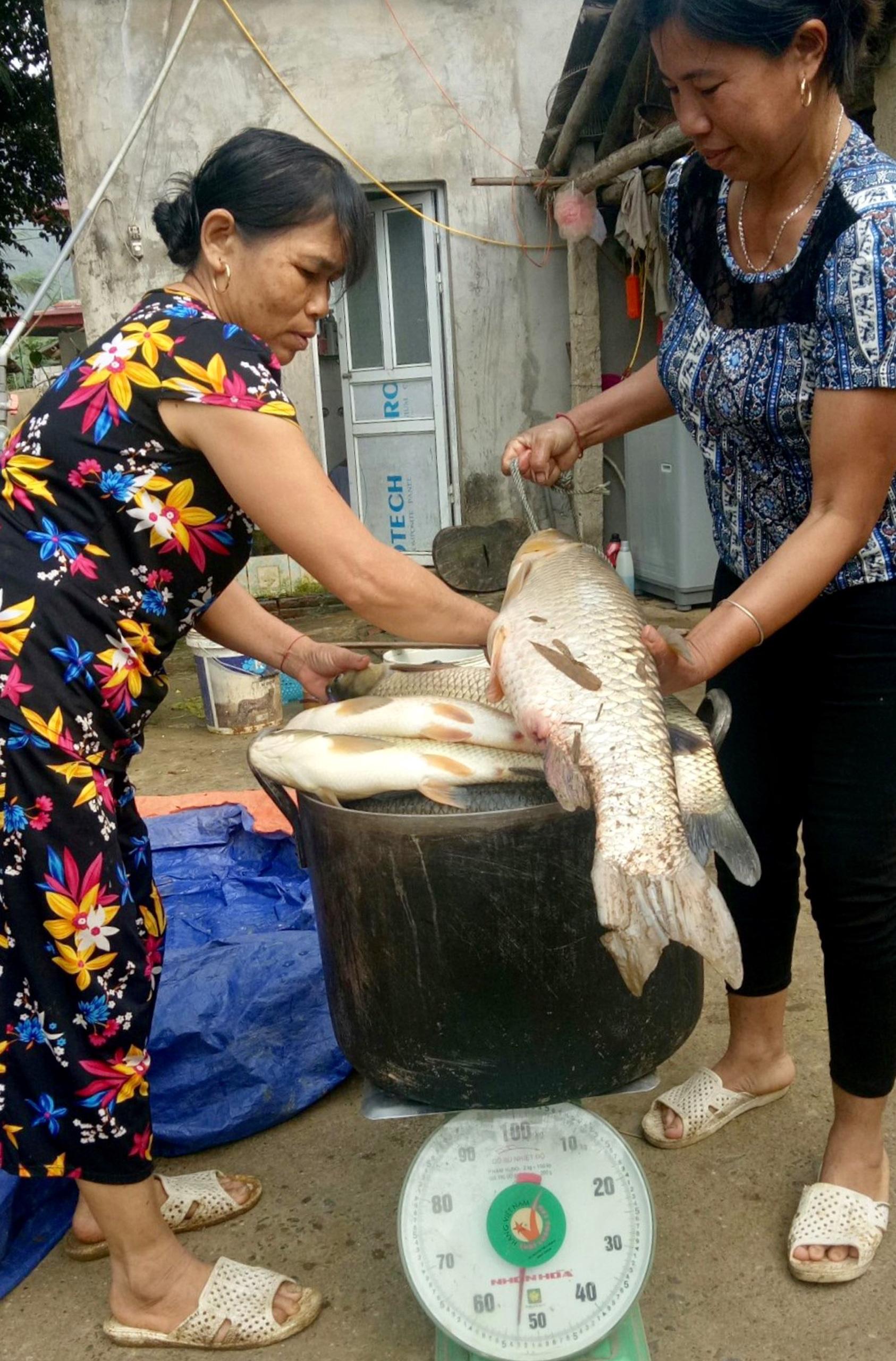Nghi vấn các doanh nghiệp chế biến lâm sản xả thải là nguyên nhân cá sông Mã chết ngày càng có cơ sở - Ảnh 5.