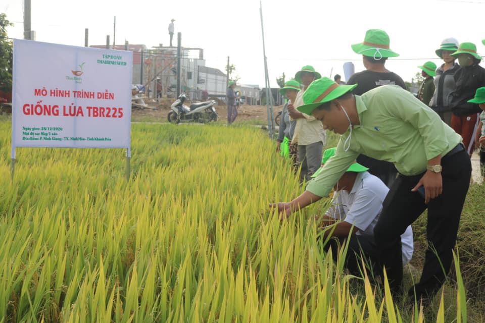 Khánh Hòa: Giống lúa TBR225 gạo ngon, cơm mềm năng suất ra sao khiến nông dân mê mẩn - Ảnh 3.