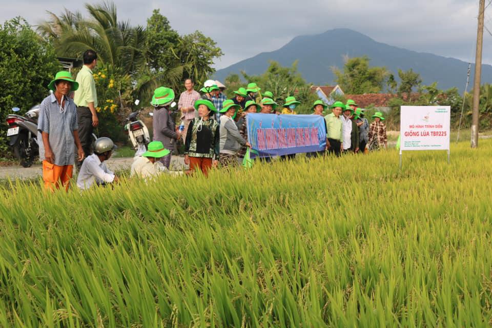 Khánh Hòa: Giống lúa TBR225 gạo ngon, cơm mềm năng suất ra sao khiến nông dân mê mẩn - Ảnh 4.