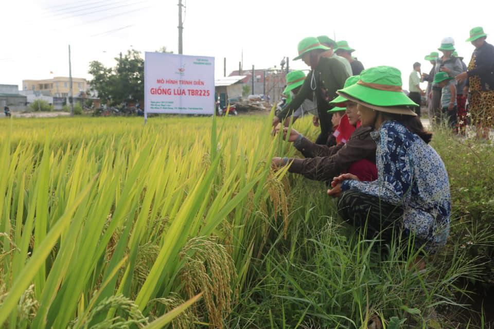Khánh Hòa: Giống lúa TBR225 gạo ngon, cơm mềm năng suất ra sao khiến nông dân mê mẩn - Ảnh 1.