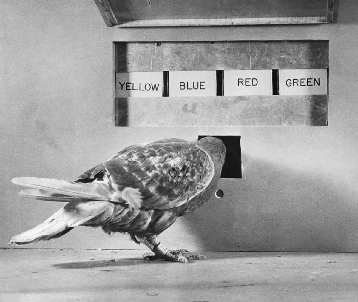 6 thí nghiệm quân sự khó tin của Mỹ trong thế kỷ 20 - Ảnh 5.