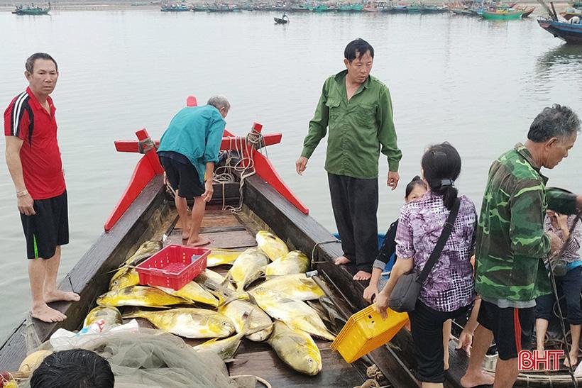 Hà Tĩnh: Dân ra biển bắt ngay được hàng tấn cá chim vàng, con nào cũng to bự, bán 300.000 đồng/kg - Ảnh 3.
