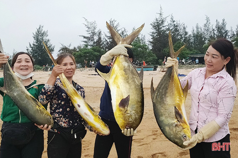 Hà Tĩnh: Dân ra biển bắt ngay được hàng tấn cá chim vàng, con nào cũng to bự, bán 300.000 đồng/kg - Ảnh 1.
