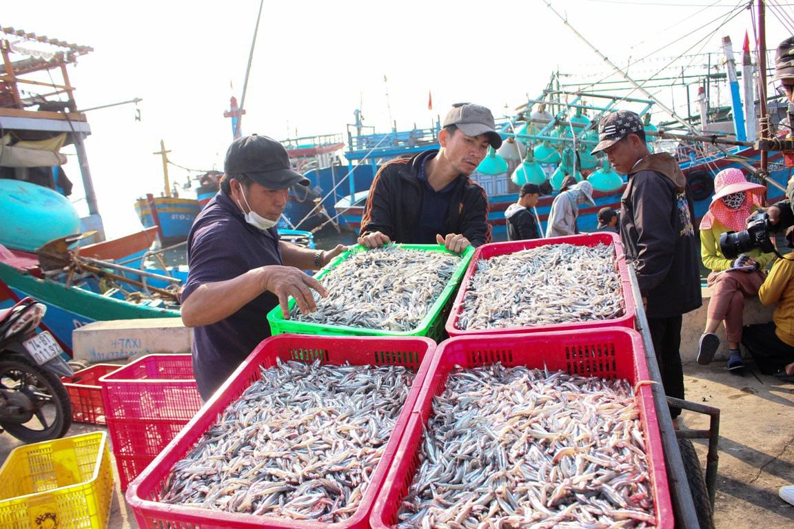 Thật bất ngờ: Thứ cá dân mình chỉ để làm mắm, phơi khô bán sang Trung Quốc lại đắt như tôm tươi - Ảnh 1.