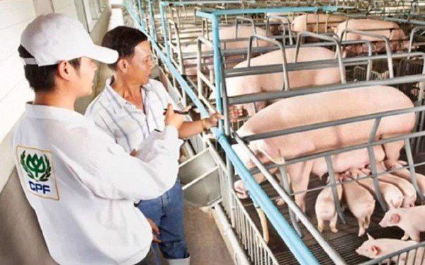 Hưởng lợi nhờ giá lợn hơi đạt mức cao lịch sử, C.P Việt Nam thu về 3,4 tỷ USD trong năm 2020 - Ảnh 1.