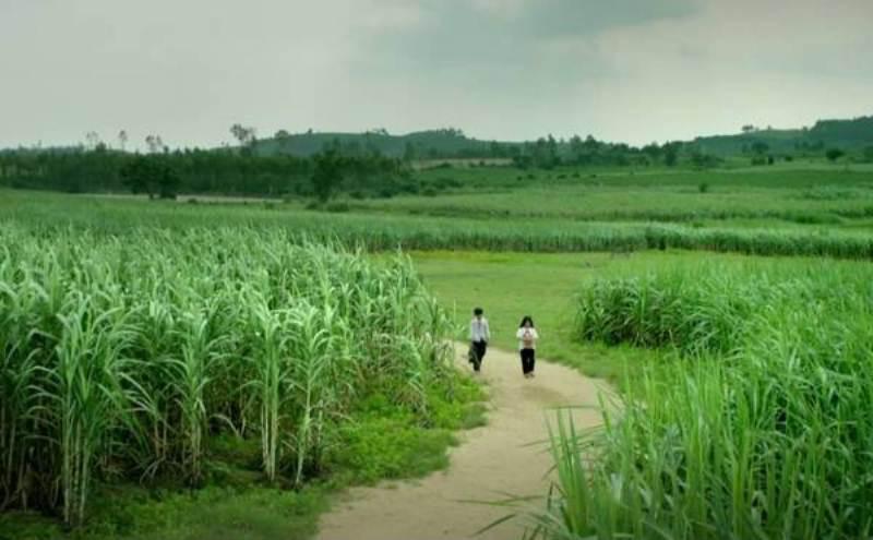 """Du lịch Phú Yên không thể """"ăn theo"""" bộ phim Tôi thấy hoa vàng trên cỏ xanh - Ảnh 2."""