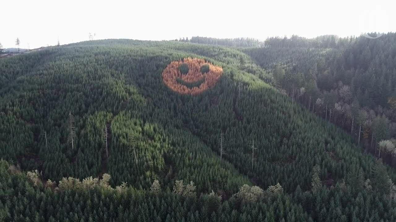 Mặt cười ở Mỹ - Ảnh 4.
