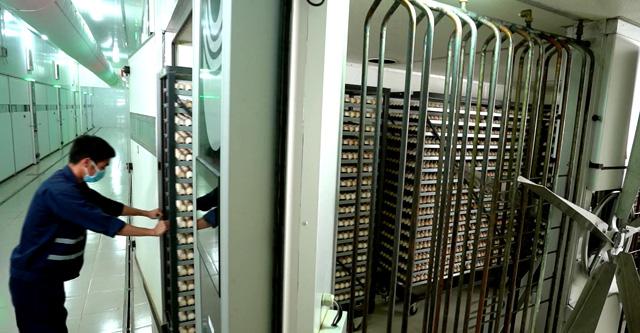Quy mô phát triển của Bel Gà và các đối tác cho thấy sự cần thiết phải có 1 nhà máy ấp trứng công nghệ cao ở khu vực phía Nam
