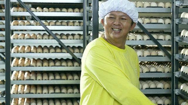 Bel Gà hiện đang sở hữu 4 trang trại gà giống; 2 nhà máy ấp trứng theo tiêu chuẩn Global GAP. Mỗi năm, Bel Gà cung cấp hơn 35 triệu con gà giống chất lượng cao cho thị trường Việt Nam và Campuchia.