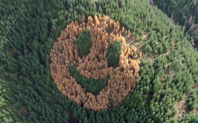 Mặt cười ở Mỹ - Ảnh 3.