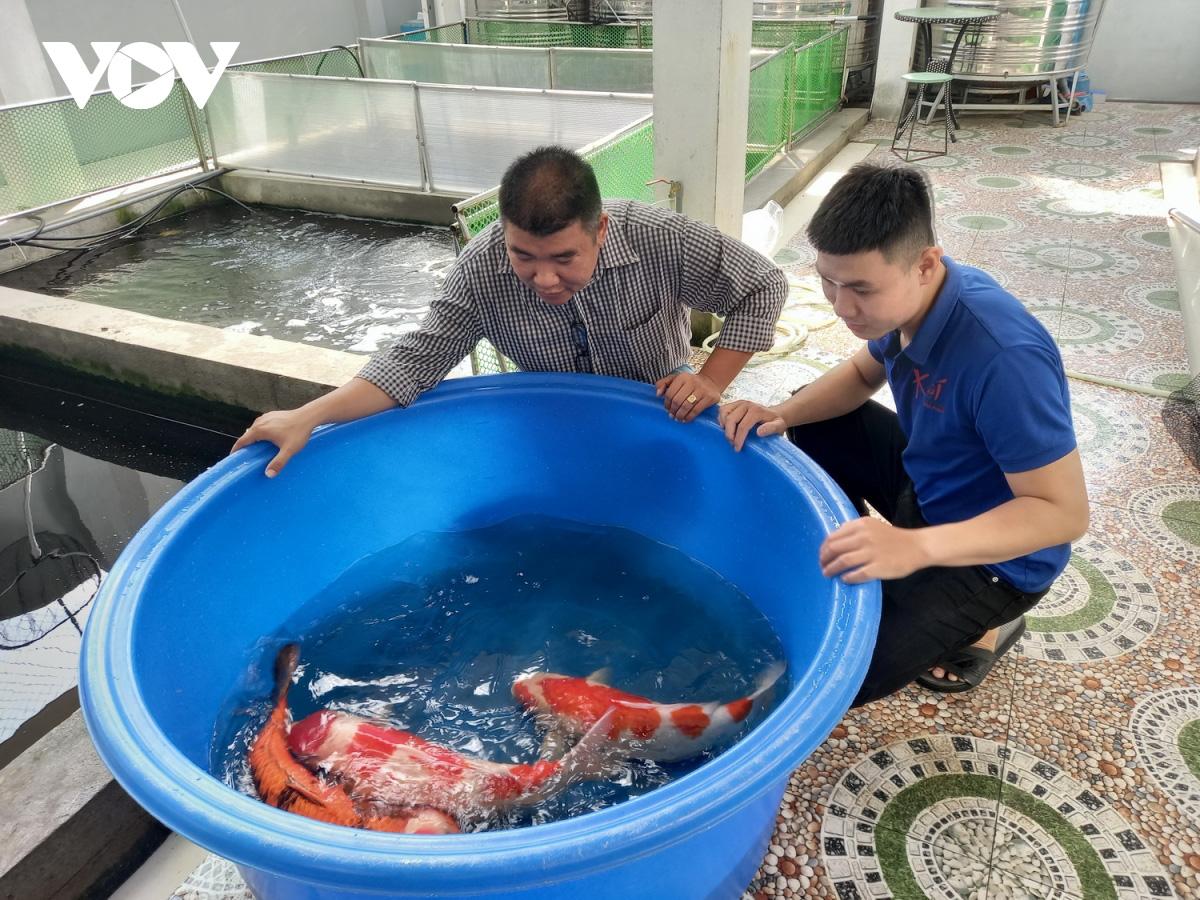 Kiếm tiền tỷ mỗi năm nhờ nuôi và kinh doanh cá Koi - Ảnh 1.