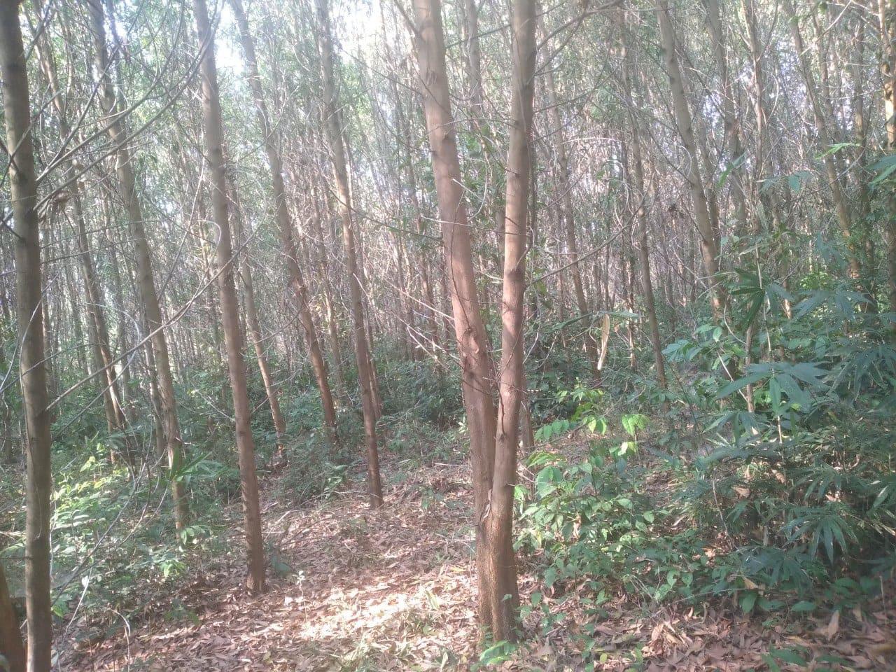 Đắk Lắk: Không trồng được cao su, cà phê, hồ tiêu, vậy dân ở vùng này trồng cây gì mà vẫn giàu lên? - Ảnh 2.