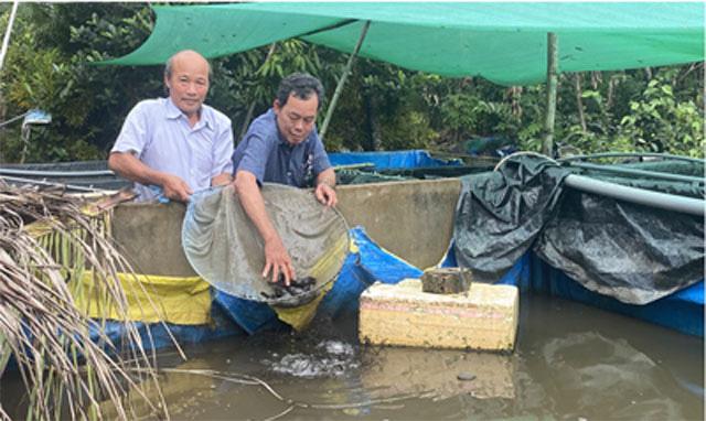 """Hậu Giang: Nuôi loài cá ví như """"nhân sâm nước"""", đến tuổi sinh đẻ rõ lắm, ông nông dân này bán khắp ĐBSCL - Ảnh 1."""