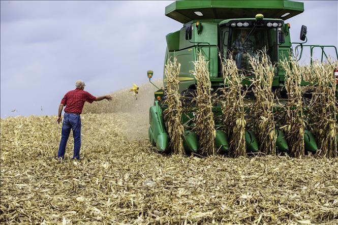 Thị trường nông sản Mỹ biến động trái chiều - Ảnh 1.