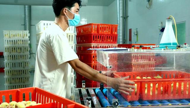 """Khánh thành nhà máy ấp trứng gia cầm 200 tỷ đồng: """"Bước đệm"""" đưa thịt gà Việt sang châu Âu - Ảnh 4."""