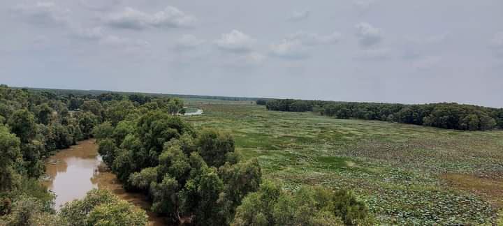 Sếu đầu đỏ trở về Vườn Quốc gia Tràm Chim sau thời gian vắng bóng - Ảnh 8.