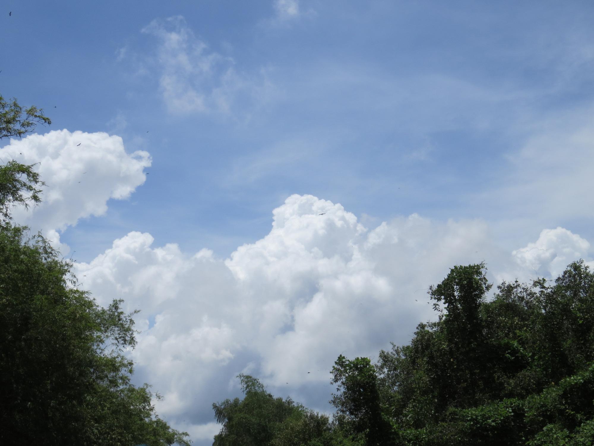 Sếu đầu đỏ trở về Vườn Quốc gia Tràm Chim sau thời gian vắng bóng - Ảnh 11.