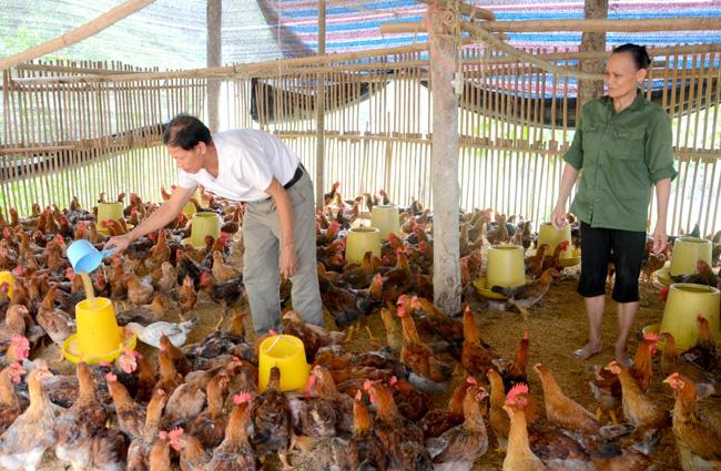 """Một năm 5 lần điều chỉnh giá thức ăn chăn nuôi: Nông dân """"treo"""" chuồng  vì thua lỗ - Ảnh 1."""