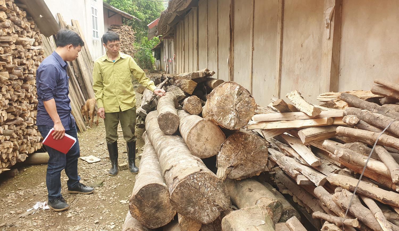 """Lào Cai: Mòn mỏi chờ đợi rồi thất vọng, nhiều hộ dân cay đắng phá bỏ cây """"vàng trắng"""" làm củi - Ảnh 1."""