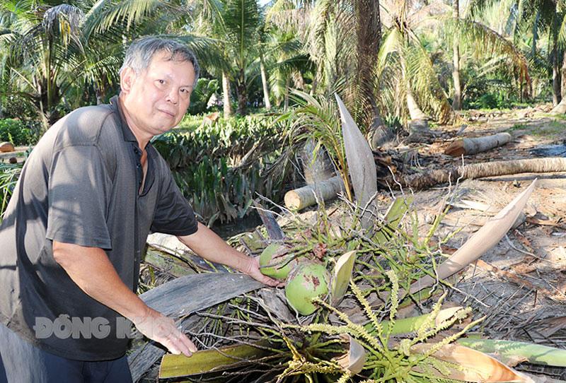 Bến Tre: Làm cách nào để giảm số sâu đầu đen hại cây dừa từ mức 100 con/cây xuống còn 17 con/cây? - Ảnh 1.