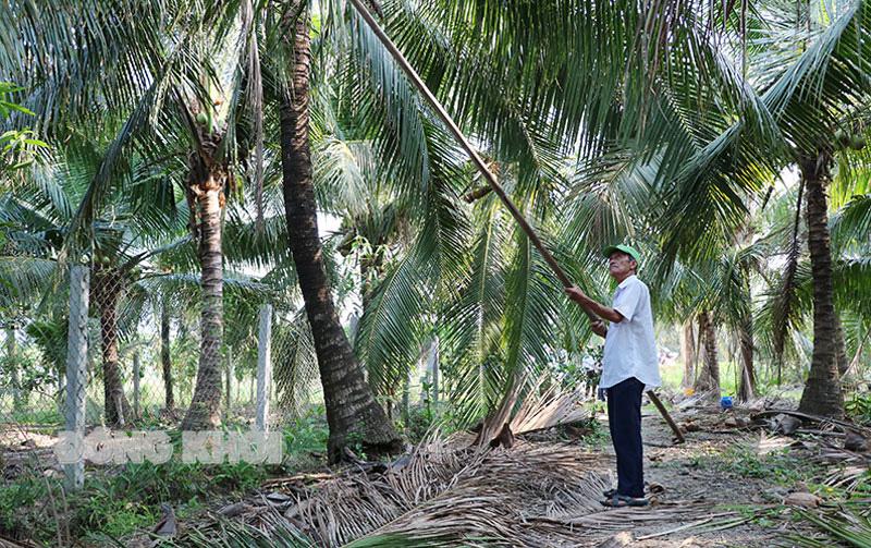 Bến Tre: Làm cách nào để giảm số sâu đầu đen hại cây dừa từ mức 100 con/cây xuống còn 17 con/cây? - Ảnh 3.