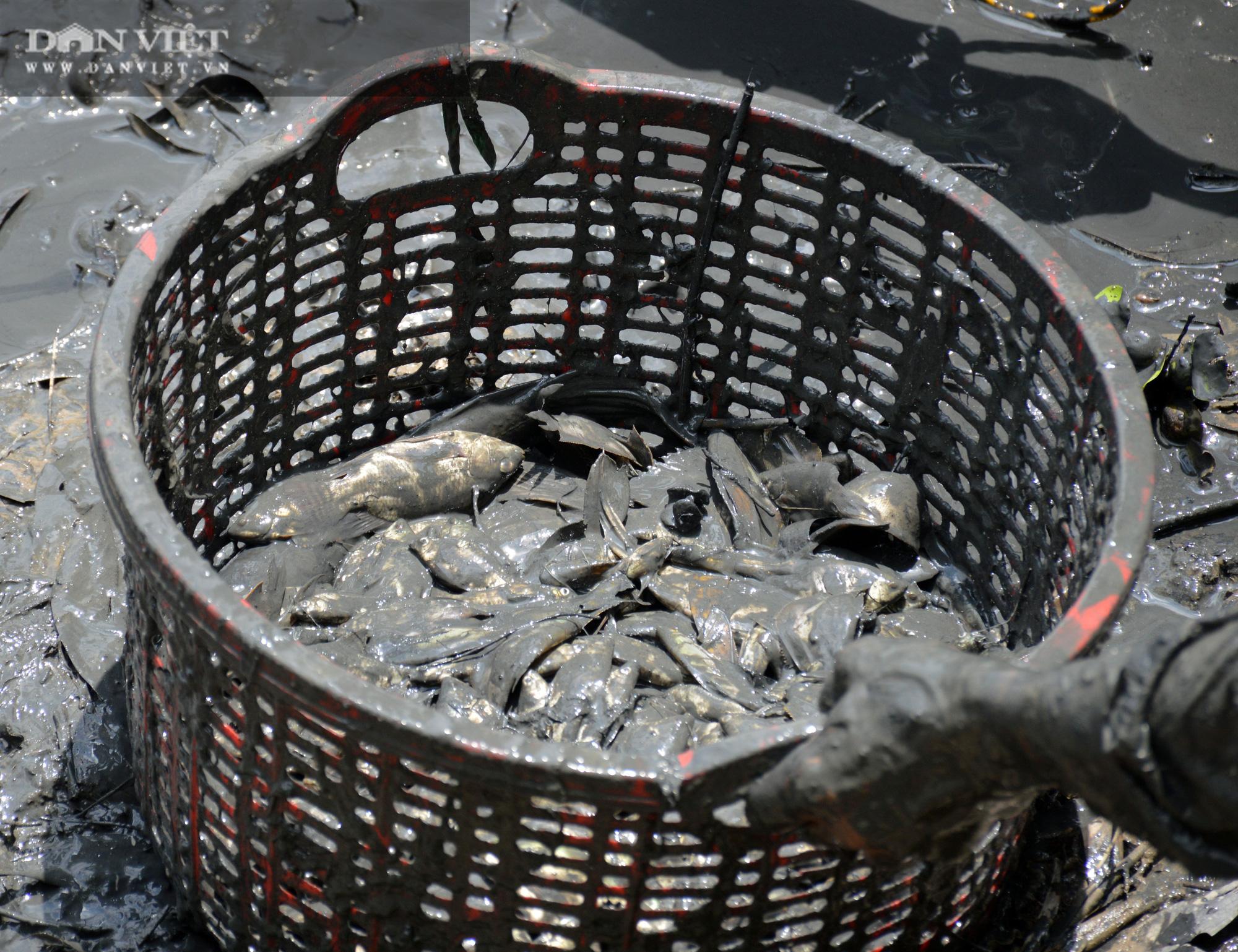 Về Cà Mau tát đìa bắt cá đồng to bự mang nướng than giữa đồng - Ảnh 8.