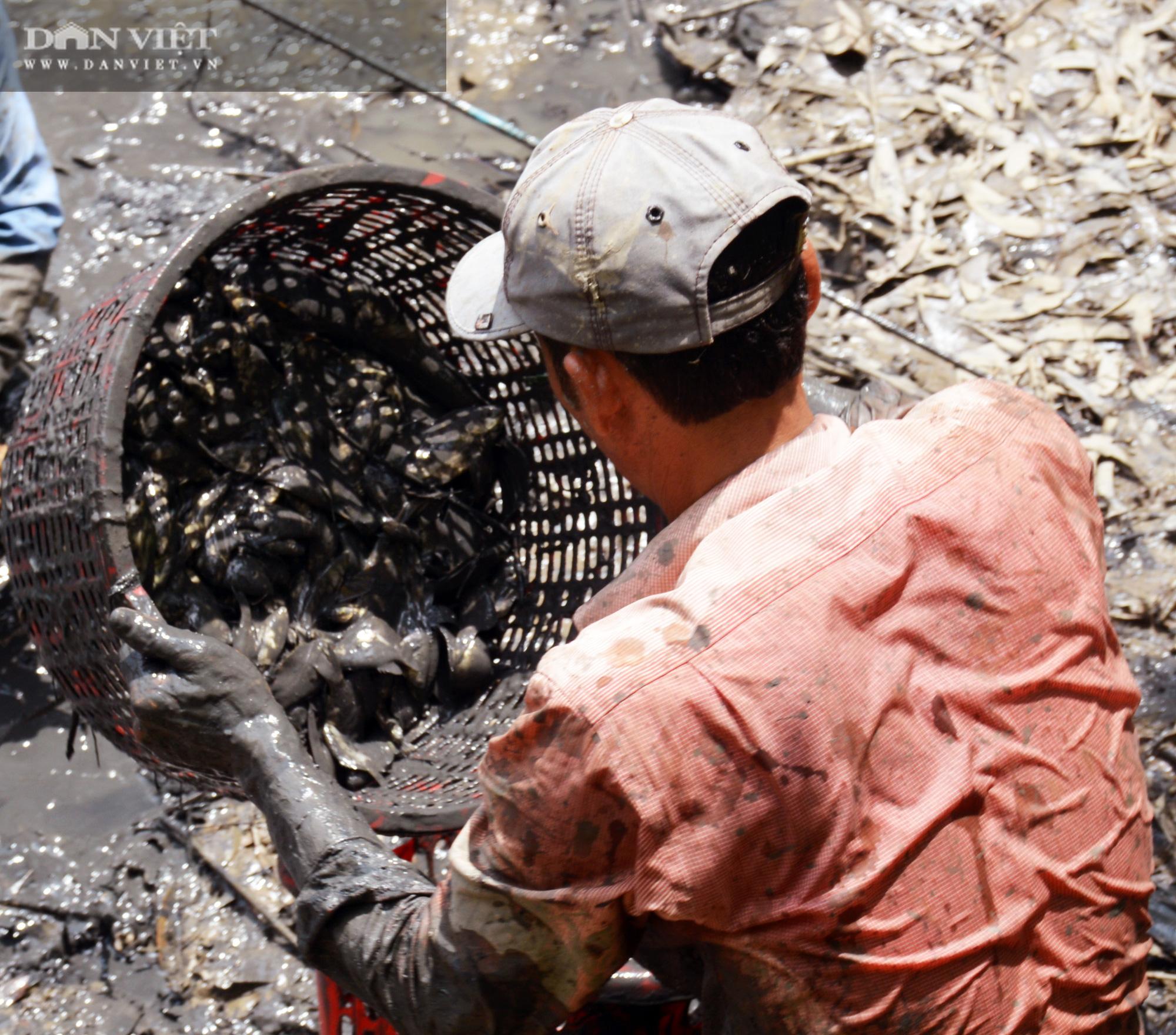 Về Cà Mau tát đìa bắt cá đồng to bự mang nướng than giữa đồng - Ảnh 9.