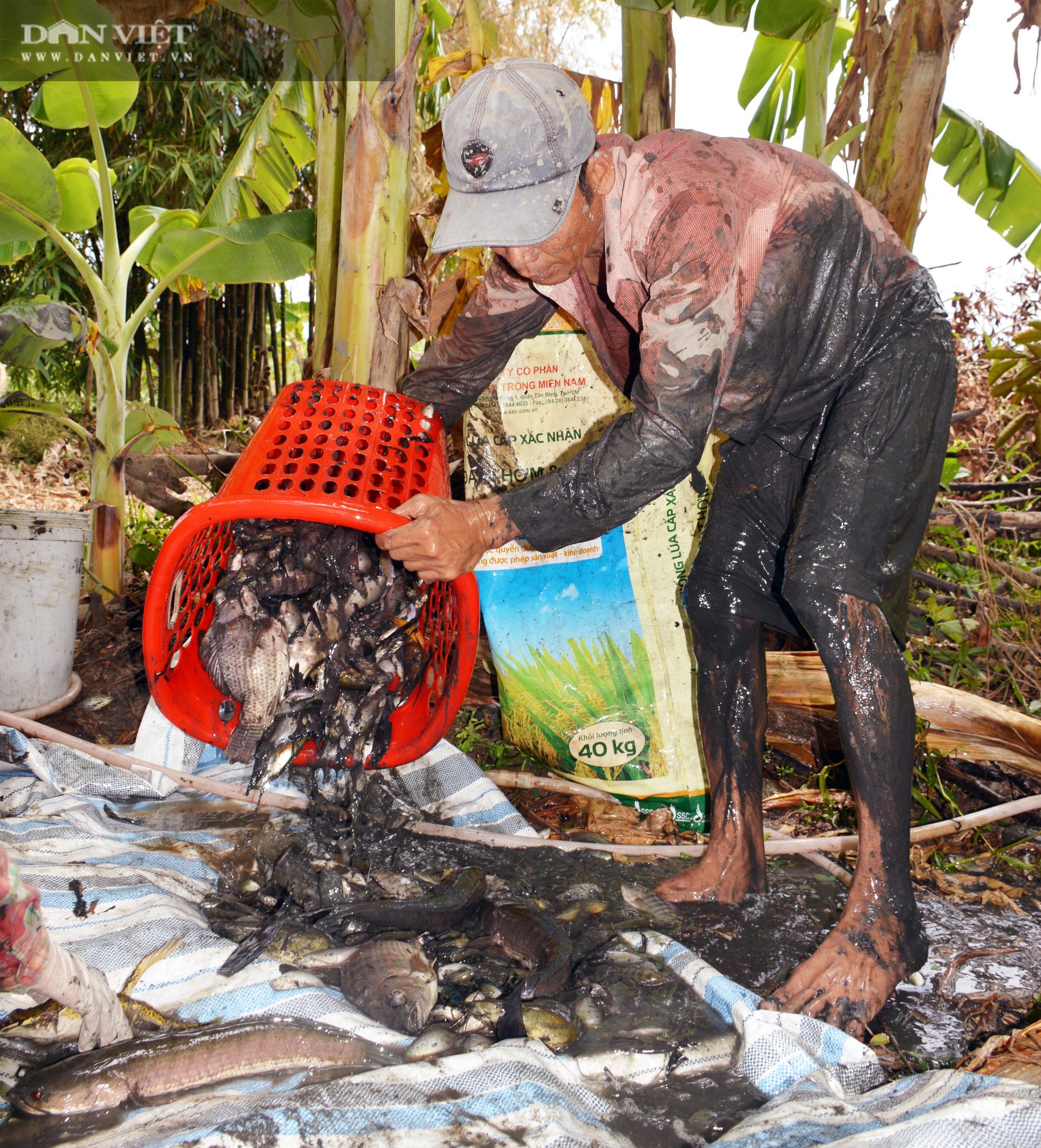 Về Cà Mau tát đìa bắt cá đồng to bự mang nướng than giữa đồng - Ảnh 10.