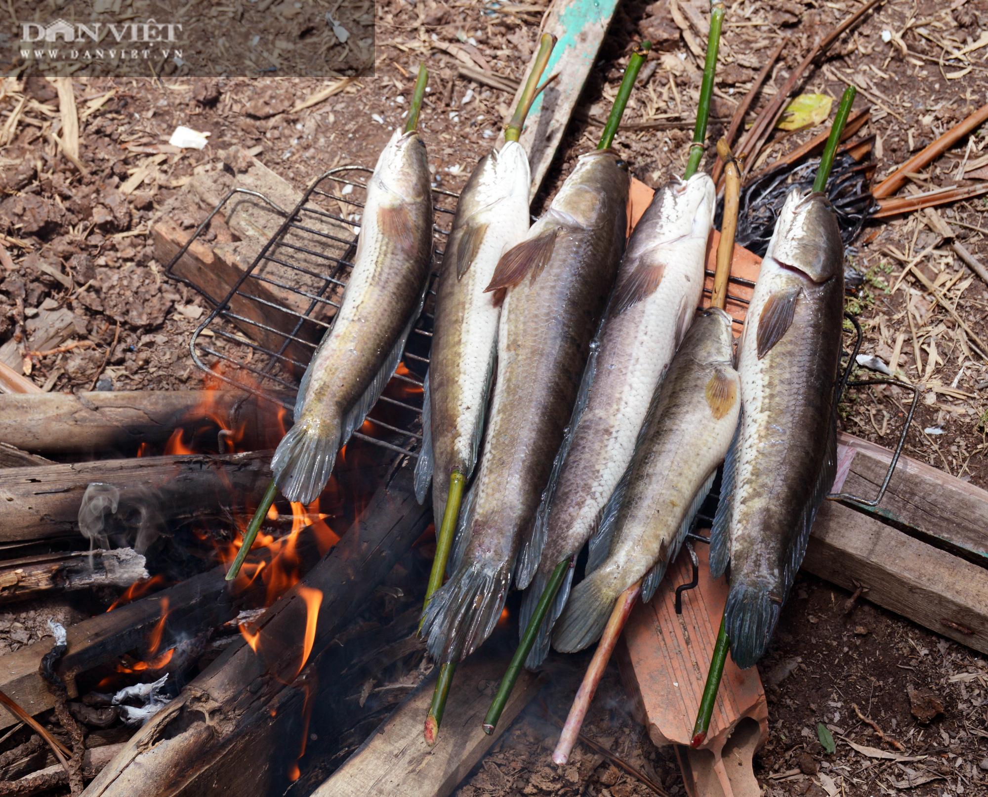 Về Cà Mau tát đìa bắt cá đồng to bự mang nướng than giữa đồng - Ảnh 18.
