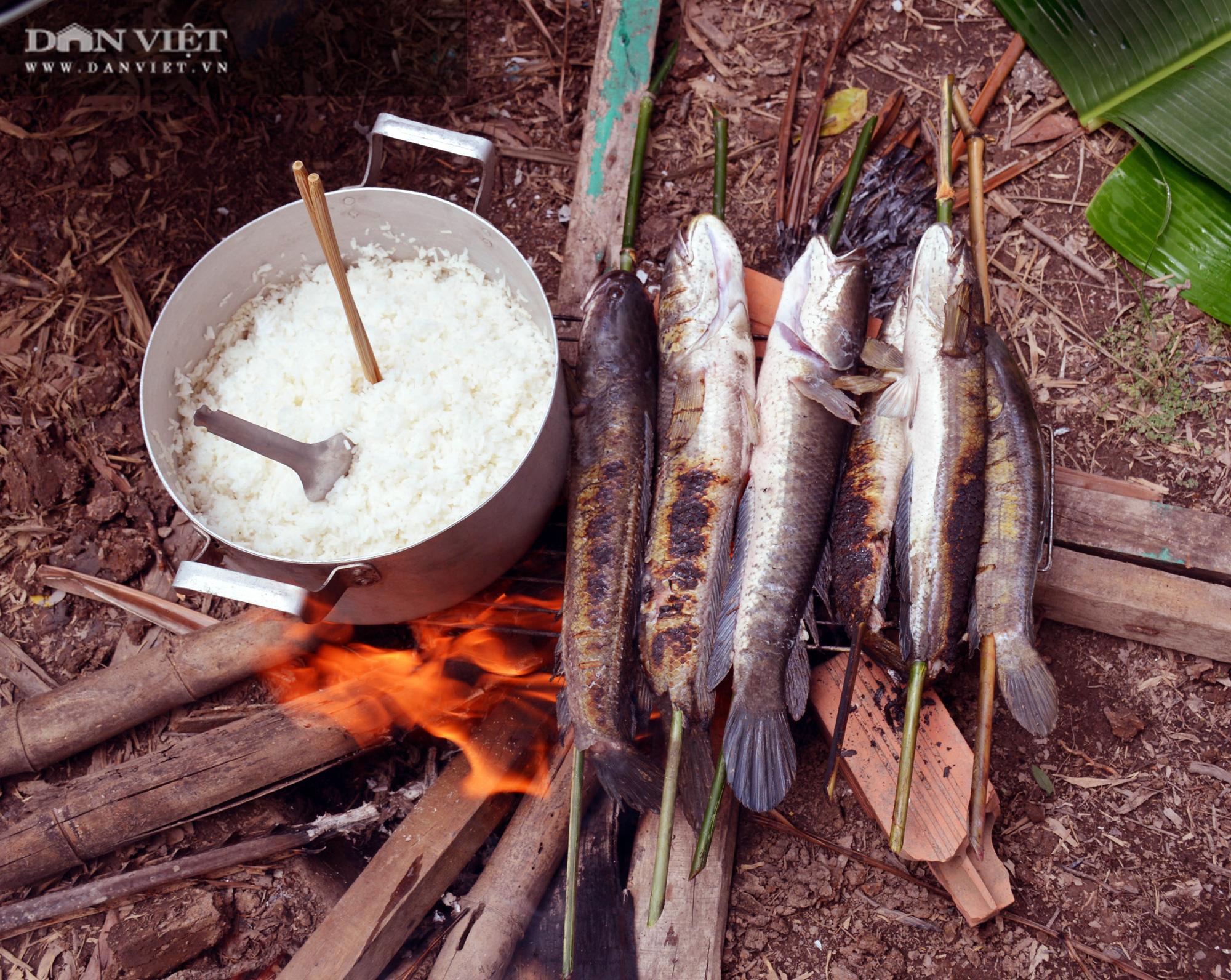 Về Cà Mau tát đìa bắt cá đồng to bự mang nướng than giữa đồng - Ảnh 21.