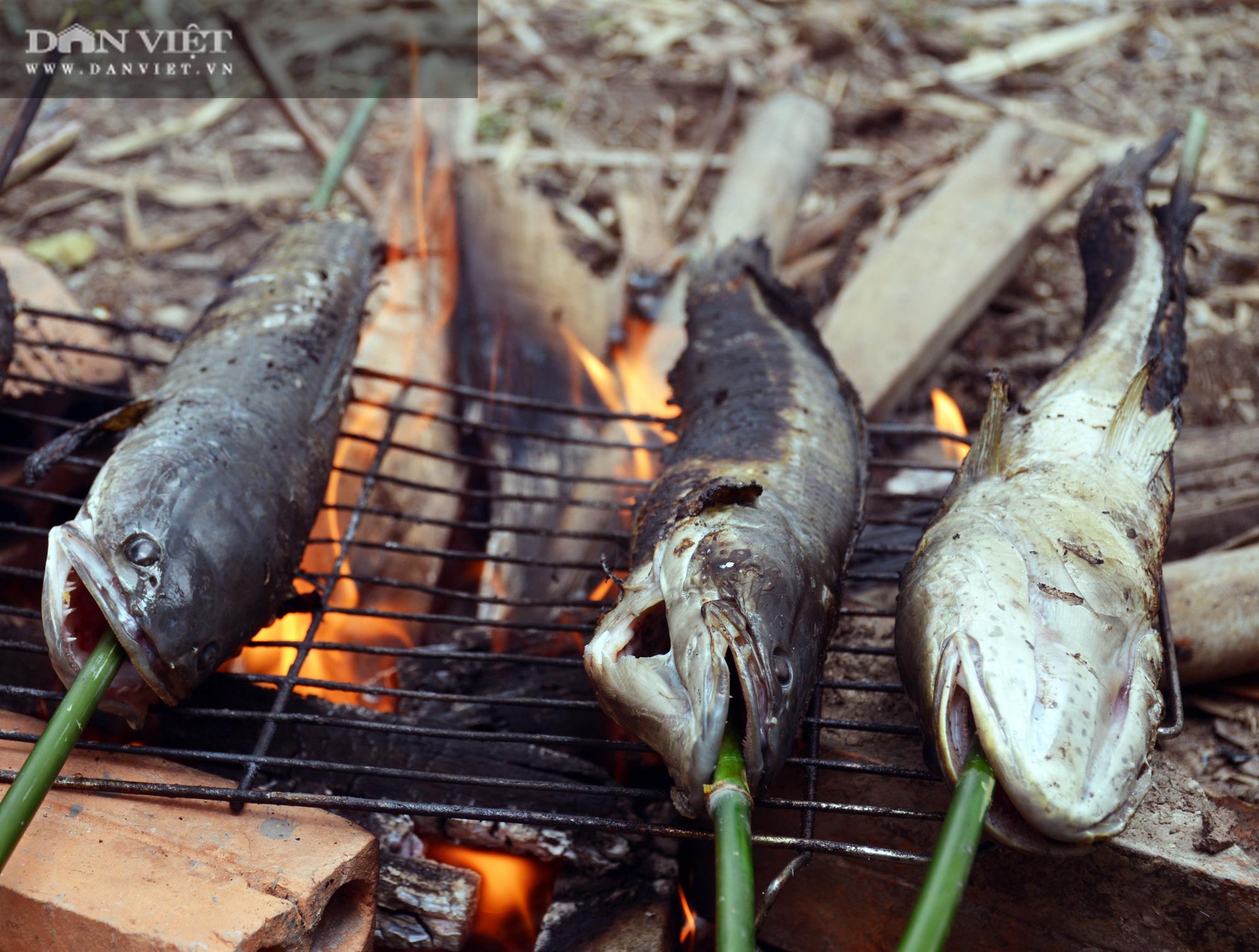 Về Cà Mau tát đìa bắt cá đồng to bự mang nướng than giữa đồng - Ảnh 20.