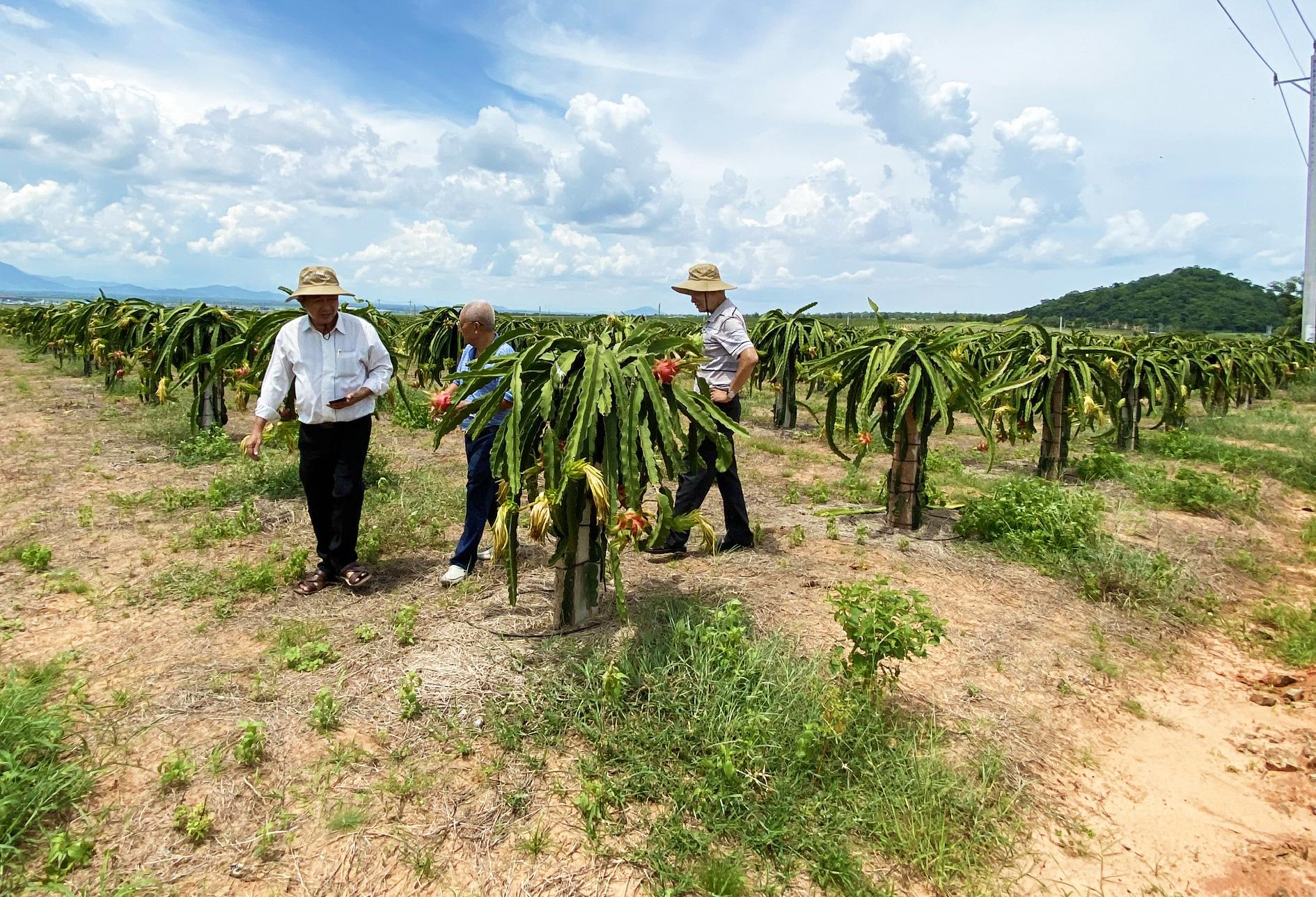 """Sản xuất rau quả """"có trách nhiệm"""" để vươn tầm thế giới - Ảnh 3."""