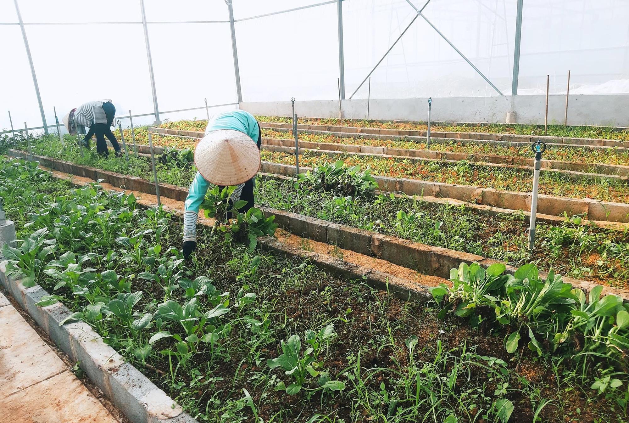 """Sản xuất rau quả """"có trách nhiệm"""" để vươn tầm thế giới - Ảnh 1."""