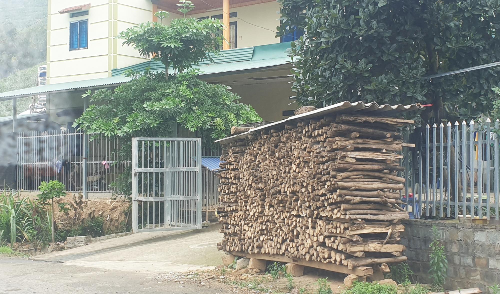 """Lào Cai: Mòn mỏi chờ đợi rồi thất vọng, nhiều hộ dân cay đắng phá bỏ cây """"vàng trắng"""" làm củi - Ảnh 5."""
