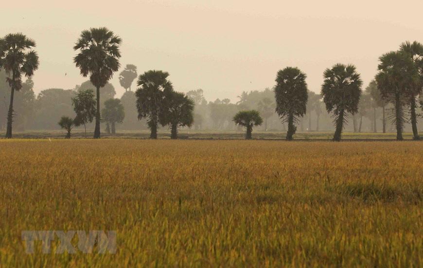 An Giang: Giống dừa nhưng không phải là dừa, cây thân thẳng cao đến 30m, uống vào mát ngọt lịm tỉnh cả người - Ảnh 12.