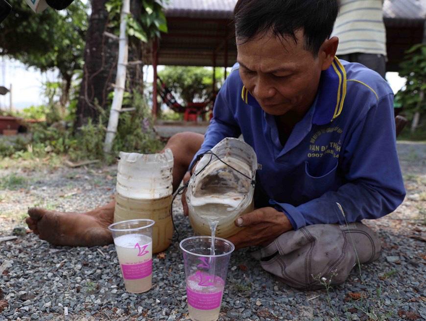 An Giang: Giống dừa nhưng không phải là dừa, cây thân thẳng cao đến 30m, uống vào mát ngọt lịm tỉnh cả người - Ảnh 7.