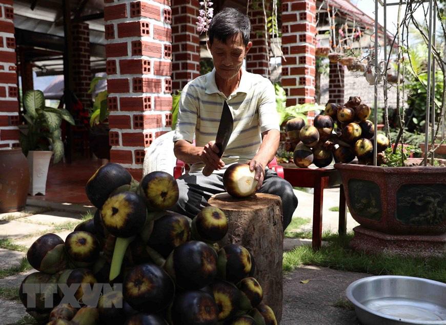 An Giang: Giống dừa nhưng không phải là dừa, cây thân thẳng cao đến 30m, uống vào mát ngọt lịm tỉnh cả người - Ảnh 8.
