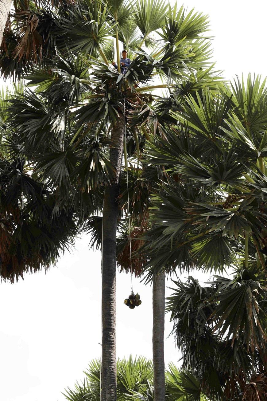 An Giang: Giống dừa nhưng không phải là dừa, cây thân thẳng cao đến 30m, uống vào mát ngọt lịm tỉnh cả người - Ảnh 10.