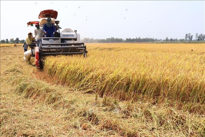 ĐBSCL: Giảm gần 200.000ha đất gieo trồng lúa, nhưng sản lượng vẫn ổn định - Ảnh 1.