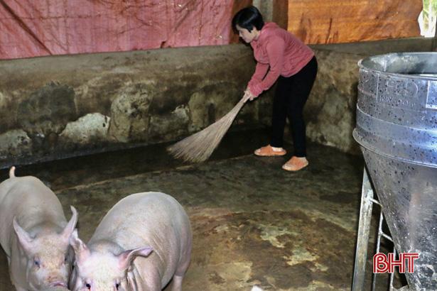 """Hà Tĩnh: """"Nữ tướng"""" chỉ huy đàn lợn đông con, mỗi năm nhẹ nhàng bỏ túi nửa tỷ đồng - Ảnh 2."""