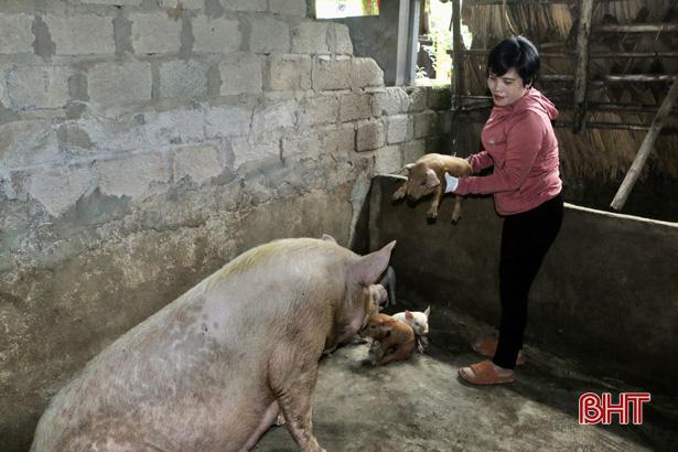 """Hà Tĩnh: """"Nữ tướng"""" chỉ huy đàn lợn đông con, mỗi năm nhẹ nhàng bỏ túi nửa tỷ đồng - Ảnh 4."""