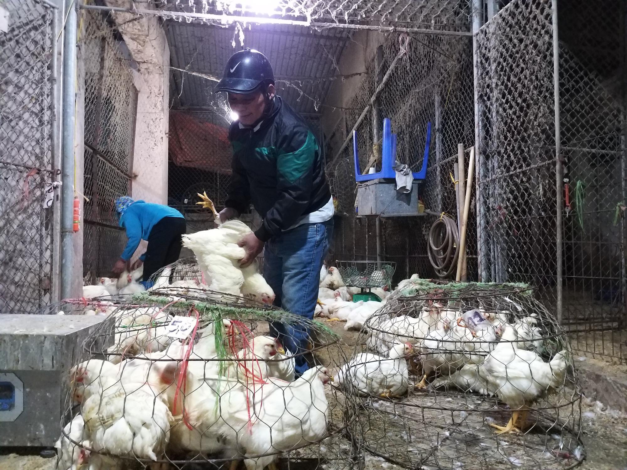 Giá gia cầm hôm nay 2/4: Giá vịt thịt miền Nam cao nhất cả nước, giá gà công nghiệp chững lại - Ảnh 1.