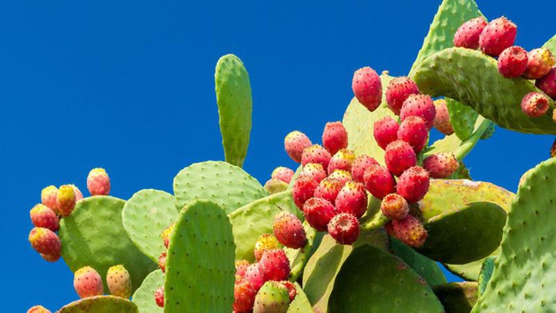 3 loại quả ở Việt Nam mọc dại đầy đường, sang nước ngoài thành của ngon vật lạ - Ảnh 3.