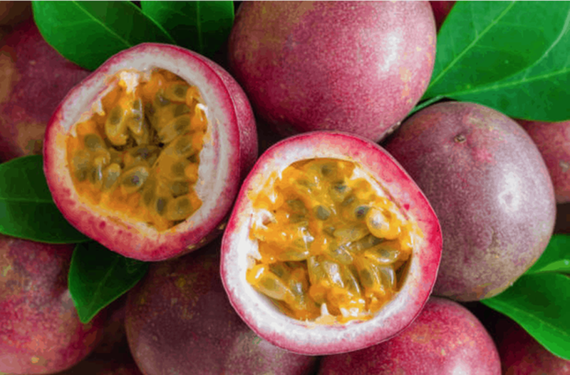3 loại quả ở Việt Nam mọc dại đầy đường, sang nước ngoài thành của ngon vật lạ - Ảnh 5.