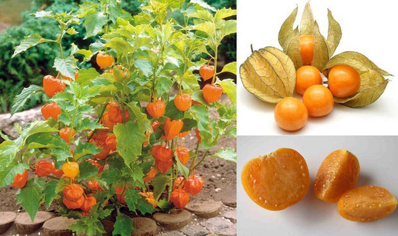 3 loại quả ở Việt Nam mọc dại đầy đường, sang nước ngoài thành của ngon vật lạ - Ảnh 6.