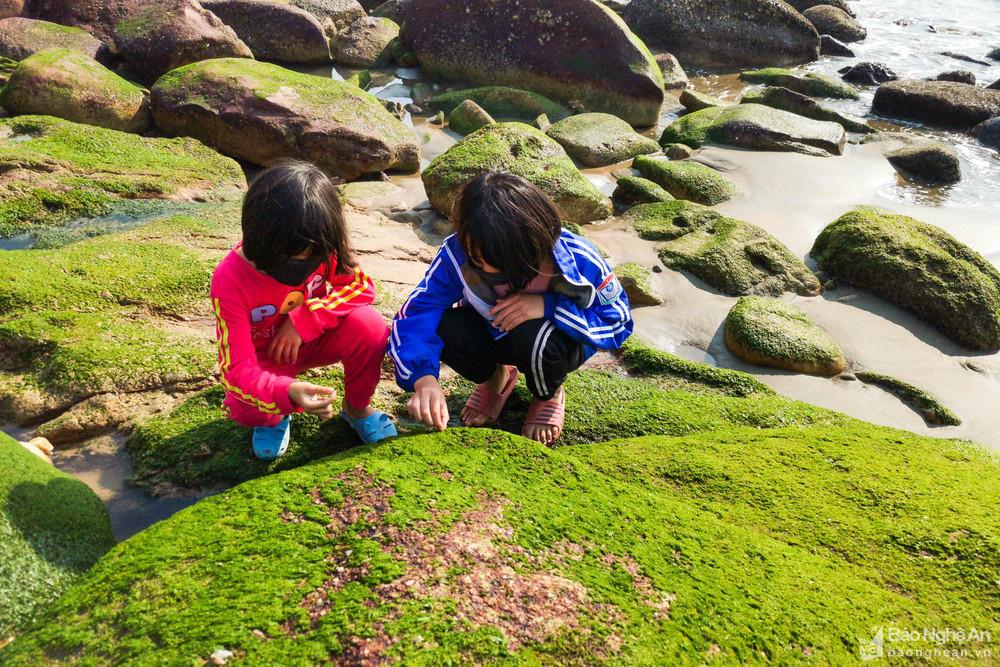 Loại cây mọc trên đá xanh le xanh lét trông rất bắt mắt ở biển Quỳnh, Nghệ An - Ảnh 11.