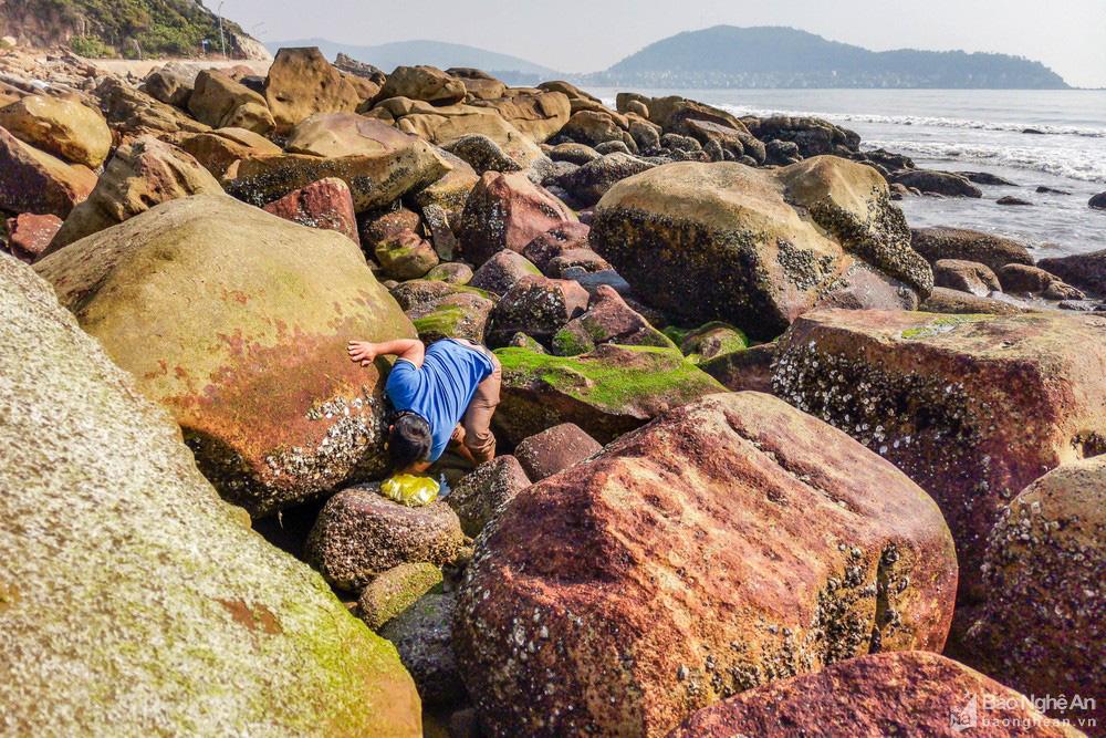Loại cây mọc trên đá xanh le xanh lét trông rất bắt mắt ở biển Quỳnh, Nghệ An - Ảnh 9.