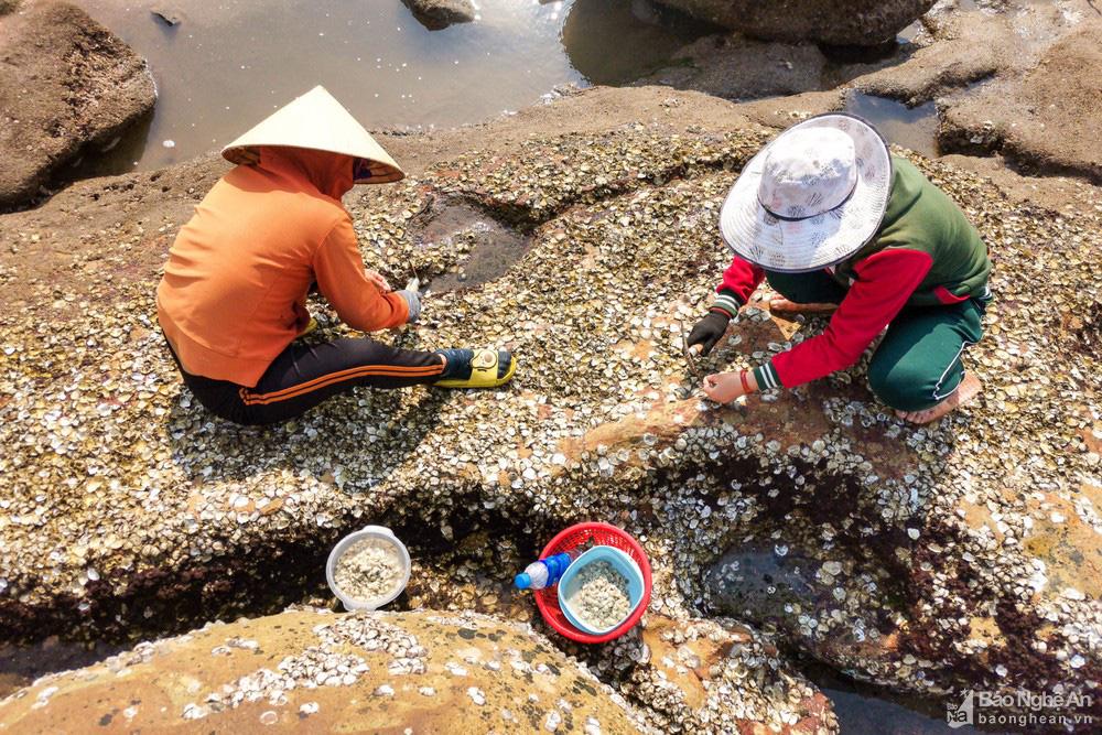 Loại cây mọc trên đá xanh le xanh lét trông rất bắt mắt ở biển Quỳnh, Nghệ An - Ảnh 7.