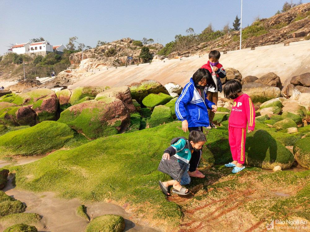 Loại cây mọc trên đá xanh le xanh lét trông rất bắt mắt ở biển Quỳnh, Nghệ An - Ảnh 10.